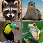[APK] Animals Memory Game 2.0 (MOD Unlimited Money)