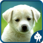 [APK] Animal Jigsaw Puzzles 1.9.17 (MOD Unlimited Money)