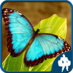 [APK] Butterfly Jigsaw Puzzles 1.9.0 (MOD Unlimited Money)