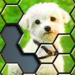 Jigsaw Puzzles Hexa 🧩🔥🎯  2.3.3 (MOD Unlimited Money)
