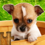 [APK] Dogs Jigsaw Puzzles Game – For Kids & Adults 🐶26.4  (MOD Unlimited Money)