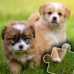 [APK] Dogs & Cats Puzzles for kids & toddlers 2 ?? 2021.44 (MOD Unlimited Money)